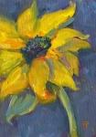 13- Sunflower