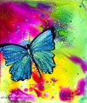 Blue-Butterfly-2a-s-c