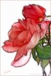 2-round-rose
