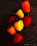 8x10-peppers2