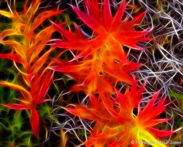 fireweed-fg16x20