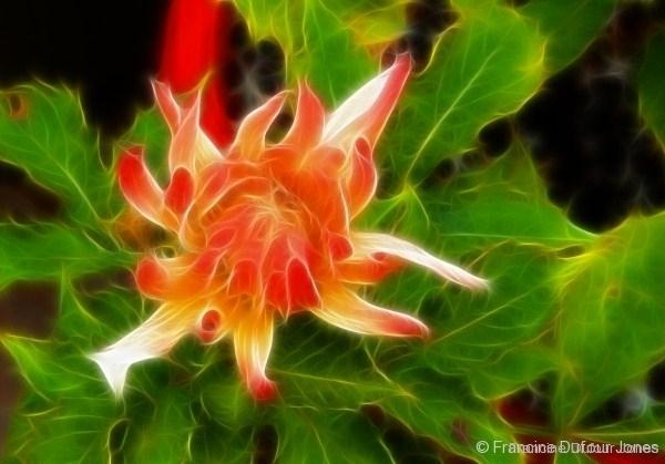 garden-cropped