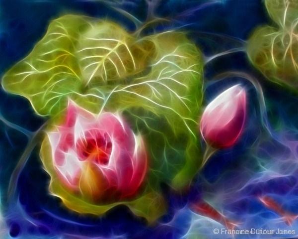 pink-lotus_