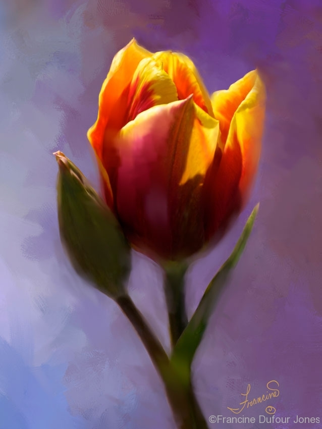 Smooth-Tulip-s-opt