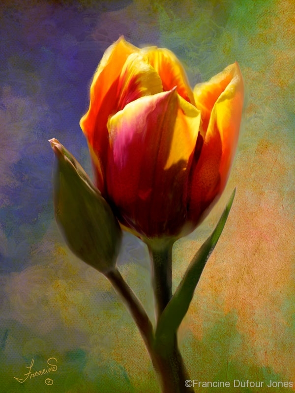 tulip-painterly_sig-006800opt